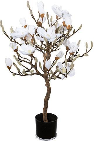 Creativ green Kunstpflanze »Magnolienbaum« aukštis 9...