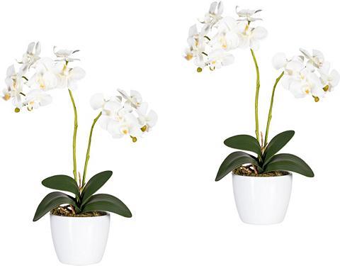 Creativ green Kunstpflanze »Phalaenopsis« Orchidee a...