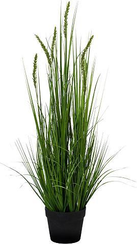 Creativ green Kunstpflanze »Penisetum« aukštis 90 cm...