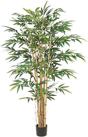 Dirbtinis Zimmerpflanze »Bambus«