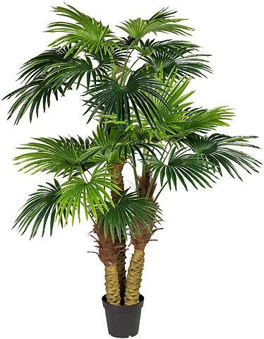 Creativ green Kunstpalme »Fächerpalme« Palme aukštis...