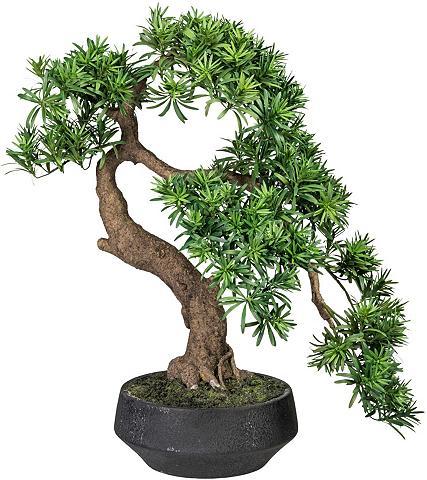 Creativ green Kunstbonsai »Bonsai Podocarpus« Bonsai...