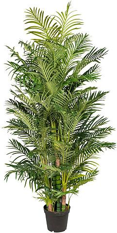 Creativ green Kunstpalme »Arecapalme« Palme aukštis ...