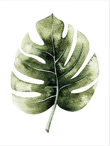 Plakatas »Kvilis - Monstera Leaf« 50/6...