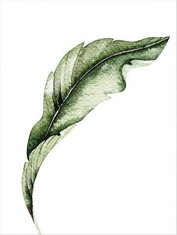 Plakatas »Kvilis - Banana Leaf 02« 50/...
