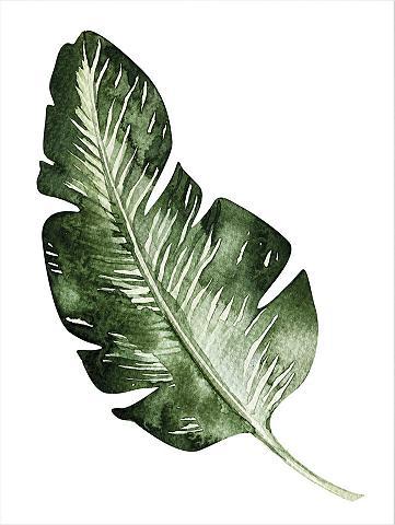 Plakatas »Kvilis - Banana Leaf« 50/60 ...