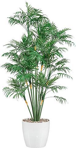 Creativ green Kunstpalme Palme aukštis 90 cm