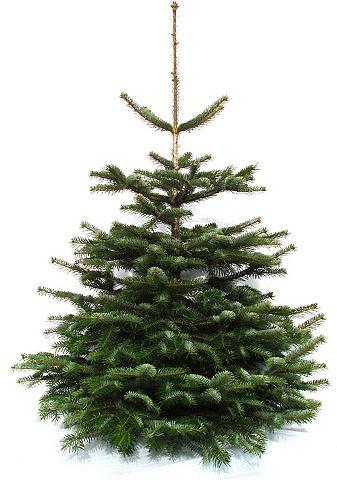 Weihnachtsbaumland Echter Weihnachtsbaum »Echte Premium-N...
