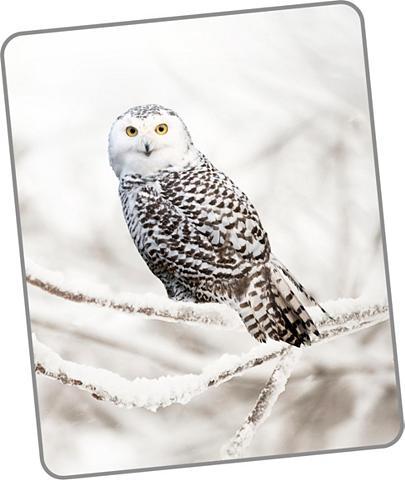 GOOD MORNING Užklotas »Snowy Owl«