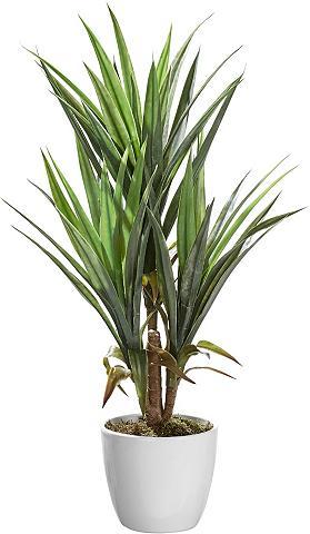 HOME AFFAIRE Dirbtinis augalas »Palme« ca. 70 cm ho...