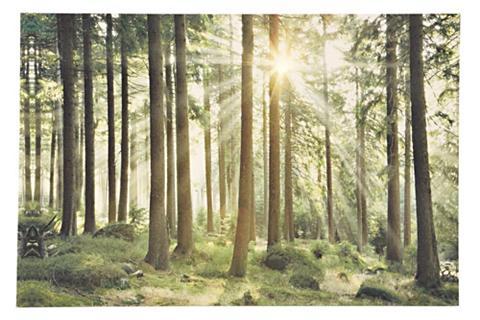 heine home LED paveikslas Wald im Gegenlicht