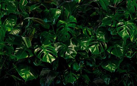 KOMAR Vlies fototapetas »Tropical Wall« 400/...