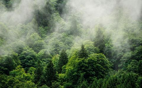 KOMAR Vlies fototapetas »Forest Land« 400/25...