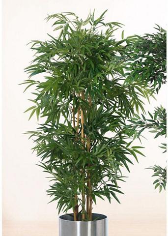 Schneider Kunstpflanze »Bambusbaum« aukštis 160 ...