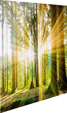 Stiklinis paveikslas »Sonne im Wald« 3...