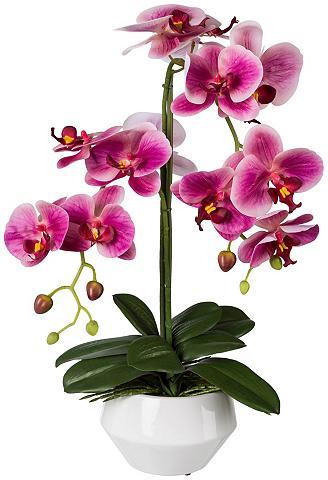 Dirbtinis augalas »Orchidee Phalaenops...