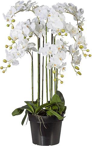 Creativ green Kunstpflanze Orchidee aukštis 110 cm