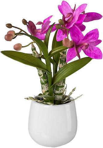 Creativ green Kunstpflanze Orchidee aukštis 32 cm Ja...