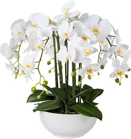 Creativ green Kunstpflanze Orchidee aukštis 54 cm