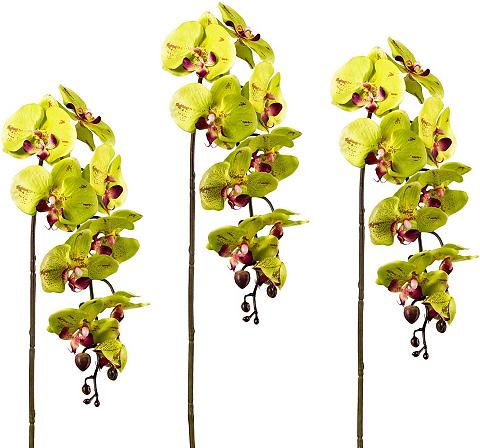 Creativ green Kunstpflanze Orchidee aukštis 98 cm 3v...