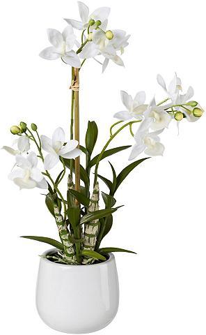 Creativ green Kunstpflanze Orchidee aukštis 40 cm Ja...