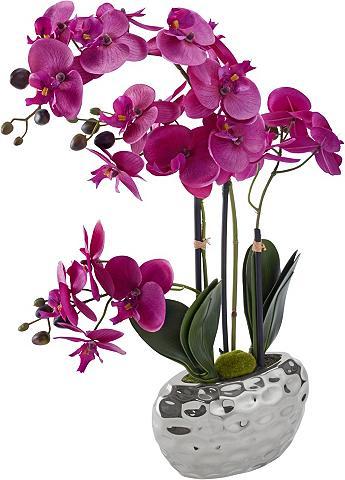 HOME AFFAIRE Dirbtinė gėlė »Orchidee« 55 cm