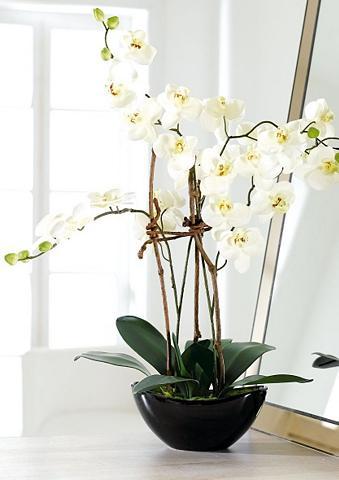 Dirbtinė gėlė »weiße Orchidee«