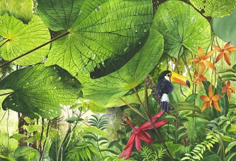 Fototapetas »Nature«