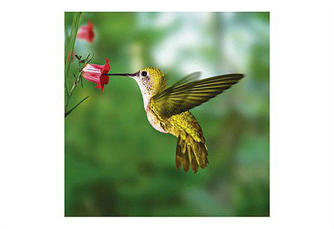 HOME AFFAIRE Stiklinis paveikslas »Humming bird«