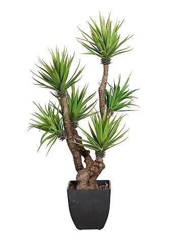 HOME AFFAIRE Dirbtinis augalas Agave