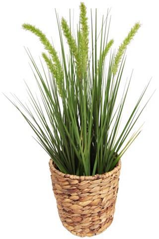 Dirbtinis augalas »Gras«